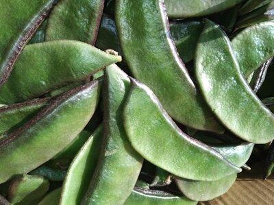 lablab beans